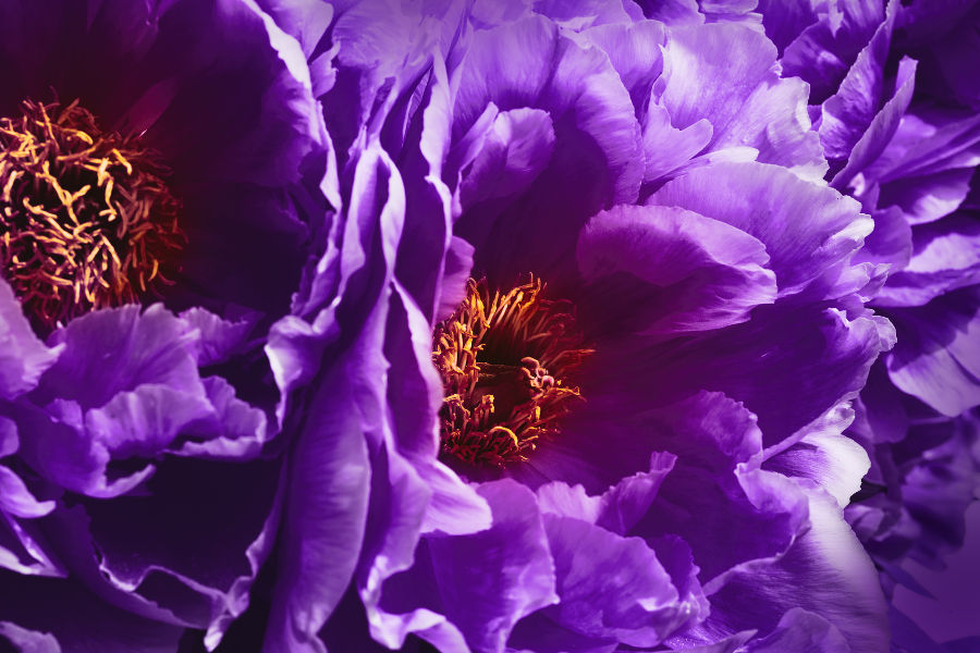 Ultra Violet Wedding Flowers